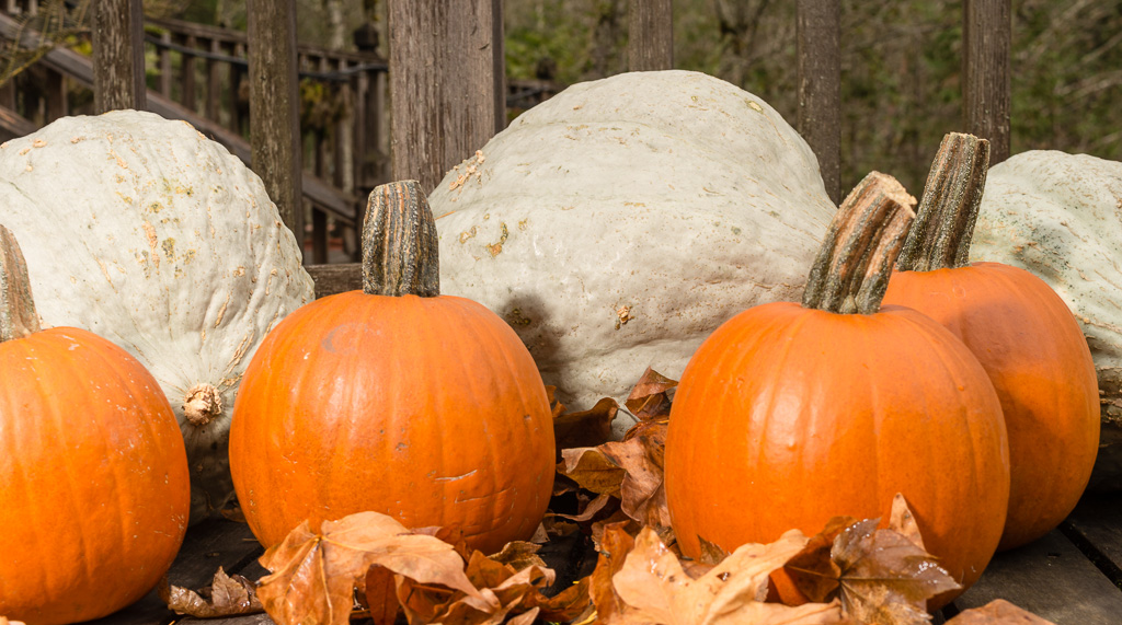Blue Hubbard Squash & Pie Pumpkins